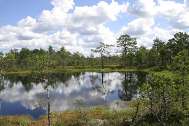 Park Narodowy Lahemaa. Bagno Viru.