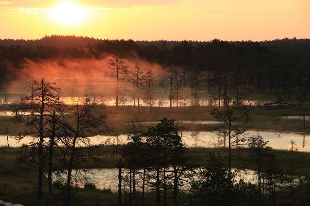 Wschód słońca w Parku Narodowym Lahemaa.